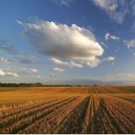 Supply of farmland publicly marketed in England falls by 13% during Q1 and values rise further