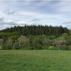 Rare opportunity to buy woodland in Northumberland