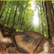 Commercial forestry outperforms many other asset classes