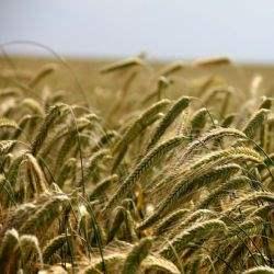 Rosła wartość gruntów rolnych na świecie