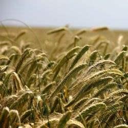 Global Farmland Index records steady annualised growth
