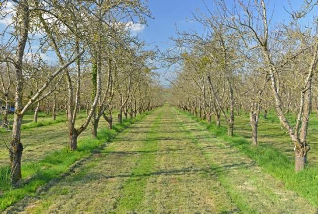 Somerset cider farm brought to market by Savills