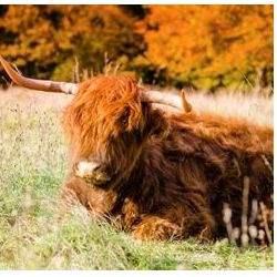 Savills marks ten years at the Royal Highland Show