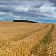 Market in minutes - Farmland market Q2 2011