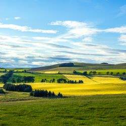 Despite uncertainty, value for money of Scottish farmland is trumping politics when it comes to buying