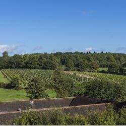 Highly regarded vineyard and winery in the heart of Sussex sold by Savills